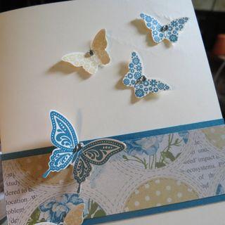 Papillon Butterfly 2