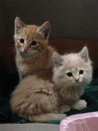 Abandoned kitties